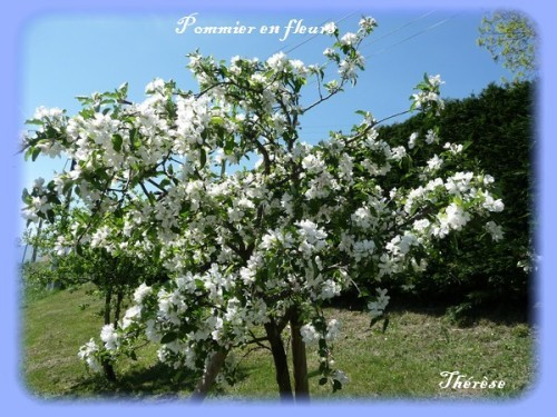 Bouquet de printemps (11)