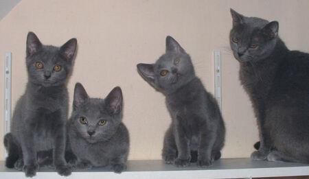 Artistes passionnés de chats ! .