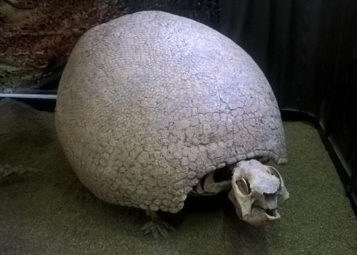 les bêtes bizarres de tarija: l'ancêtre du tatoo
