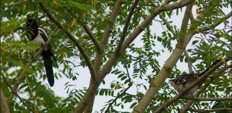 Festival BIRDFAIR à Paimboeuf