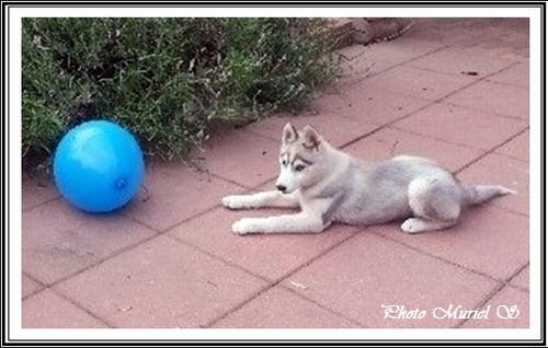 Jaya (4 mois)