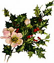 holly-blooms.jpg