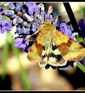 Papillon n°6