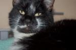 Mon chat d'amour : LILI