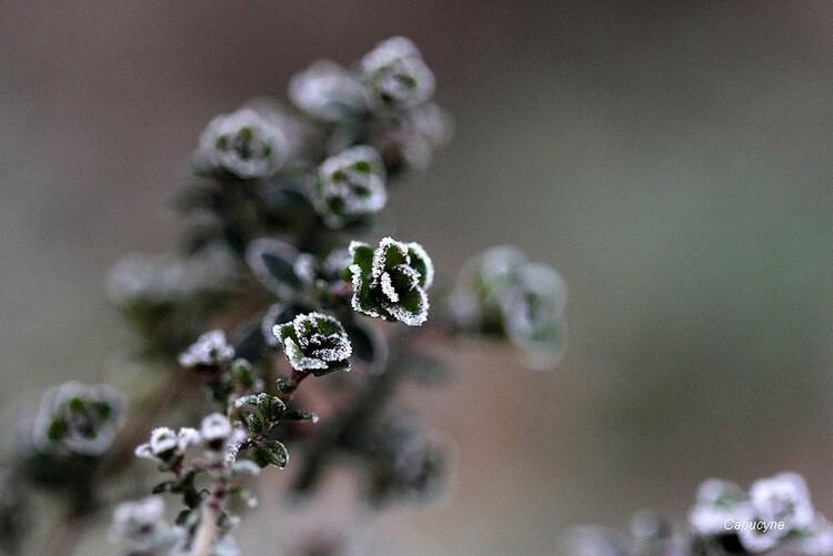 L'hiver éclair