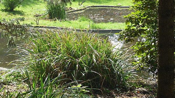 Jardins Albert Kahn 071