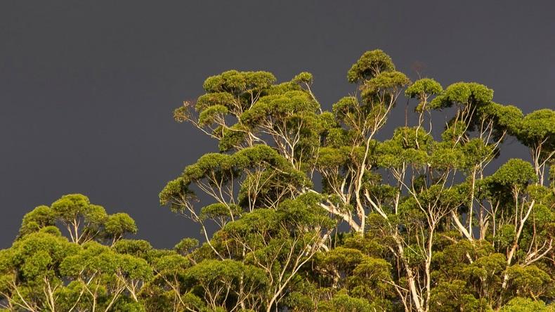 Vert [défi du lundi] ciel gris
