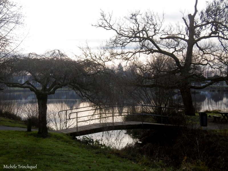 Une balade au Lac de Christus à ST PAUL LES DAX (40), le 13 janvier (suite)...