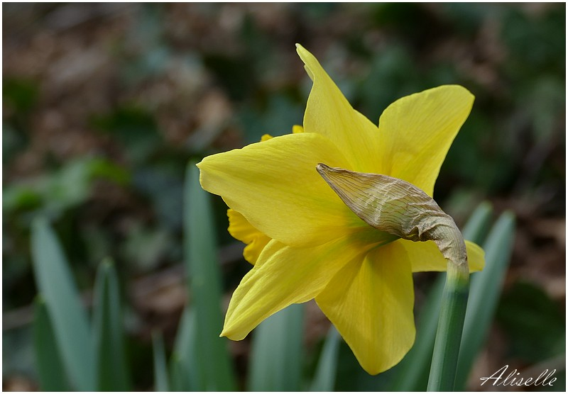 Le printemps en hiver...
