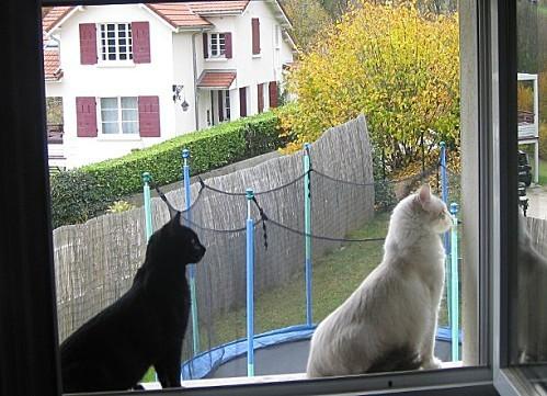 chats fenre