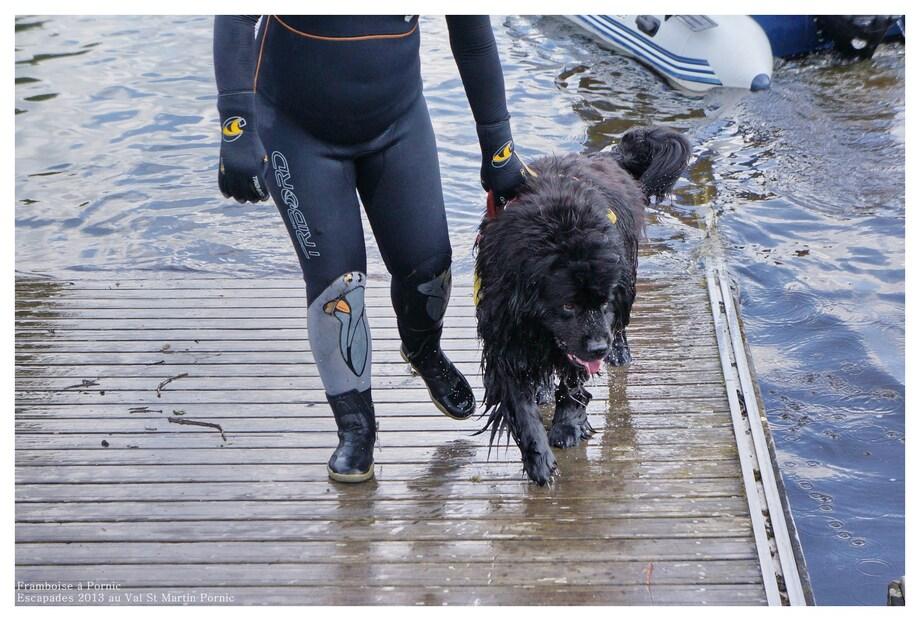 Escapades 2013 - Les chiens de sauvetage