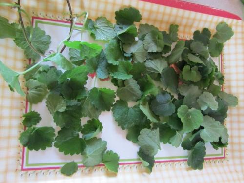 Plantes sauvages juin 2011