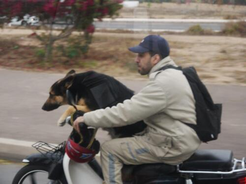 Une photo insolite..sur le boulevard de contournement d'Agadir