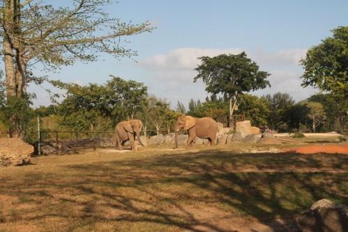 zoo 2618