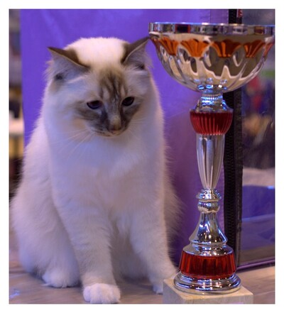 ► Einstein : 1er birman Europe du Sud