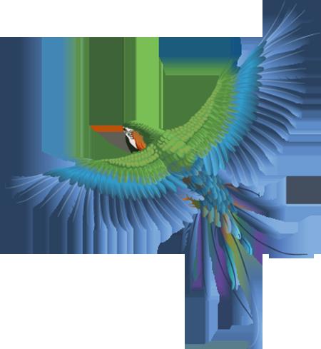 Résultats de recherche d'images pour «tubes oiseaux»