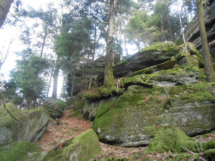 Vosges-Forêt d'Eloyes