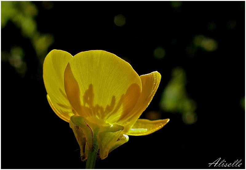 Retour sur le printemps #2