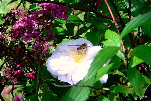 Des fleurs et des insectes ...