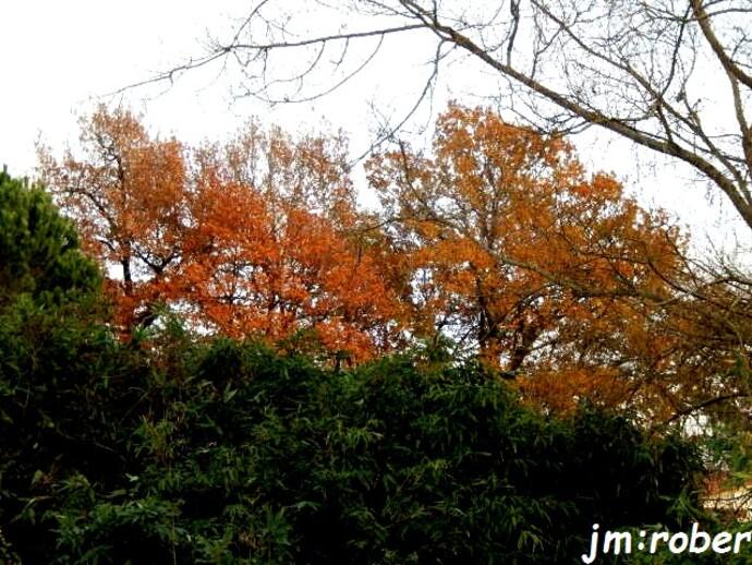 L'automne nous fuit avec sa poèsie de couleur