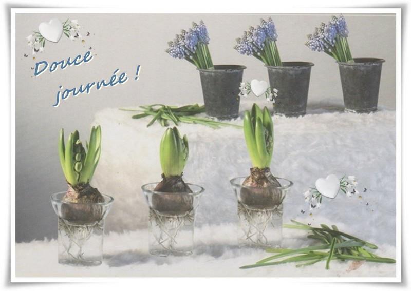 """""""Perles vertes"""" de l'hiver ..."""