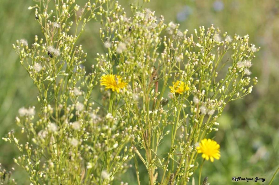 DSC0371-fouillis-de-fleurs