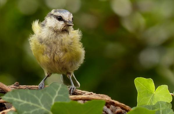 Le nid gazouillant