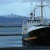 le port de Reykjavik.JPG