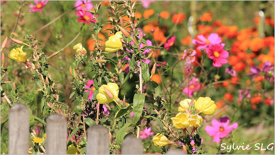 Fleurs de fin d'été