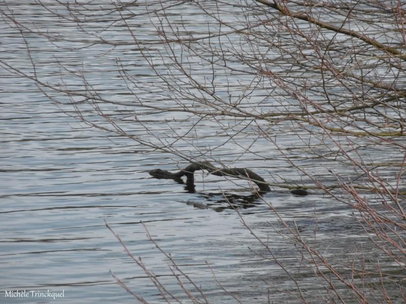 Une balade au Lac du HOUGA (32), le 7 février...