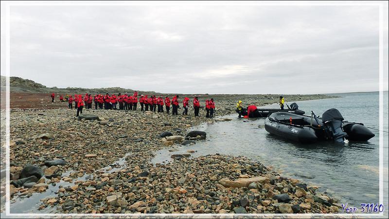 Ayant vu tout ce qu'il y avait à voir, du haut de la falaise jusque sous l'eau, à la queue-leu-leu nous quittons Qariaragiuk - Somerset Island - Nunavut - Canada