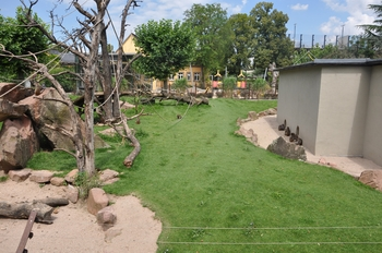 zoo allemagne2 432