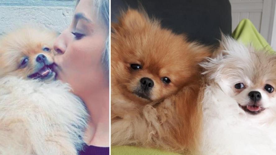 Cathy est en colère contre l'AFSCA: «On a embarqué et euthanasié mes deux chiens»