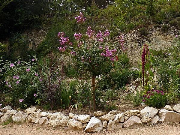 Lagestromia arbuste