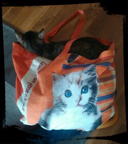 Le chat-sac ou le cat-bag ?