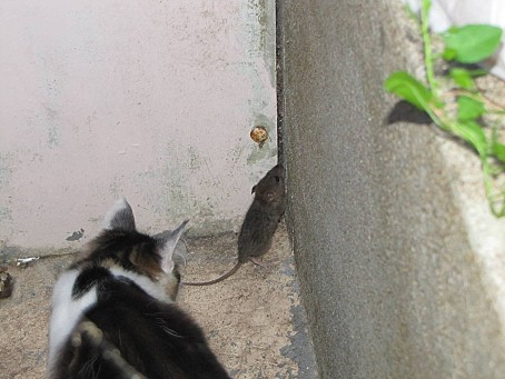 mes-animaux-de-compagnie-et-les-animaux-de-la-nature-6736.JPG