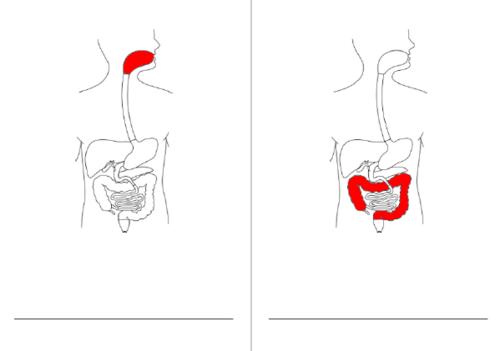 Livret à compléter/colorier : système digestif