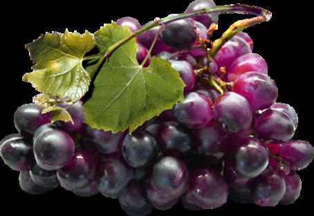 Fruits / 7