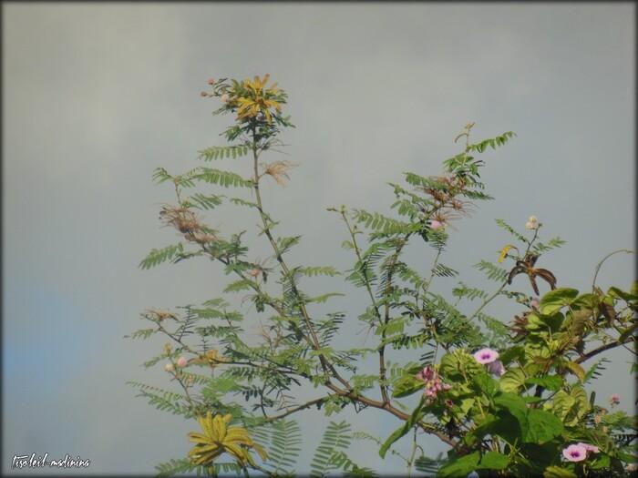 Encore un Bougainvilliers et autres fleurs