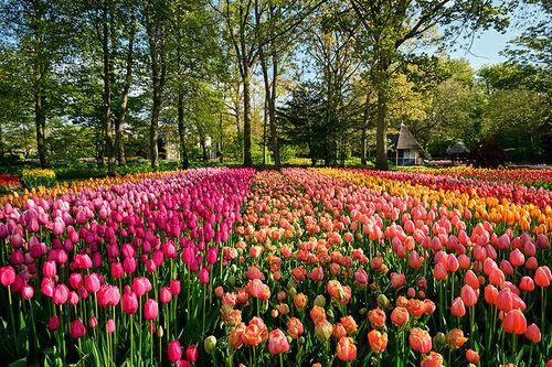 une jolie fleur de toutes les couleurs ....