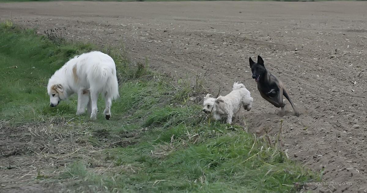 Guiness, Elie et Cimba