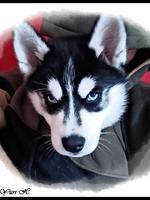 Saïka (3 mois)