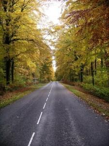 031-Forêt d'Argonne