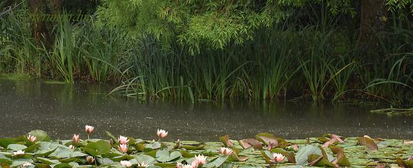 Le Jardin du Pellinec
