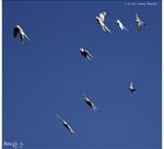 Galerie Oiseaux (2013/8)