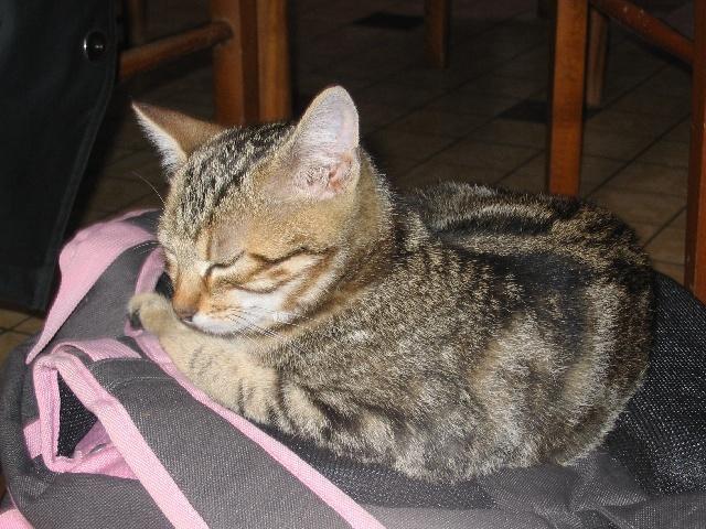 Mon chat dort sur mon cartable de CM2