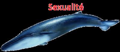 ~ La Baleine Bleue ~