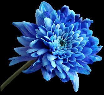 bleu022