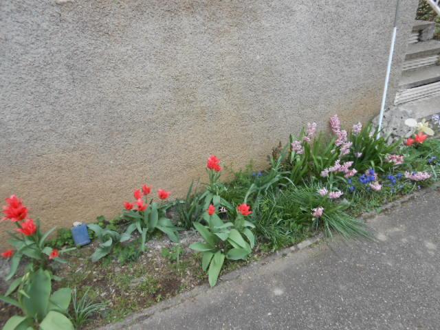 Un peti tour au jardin !