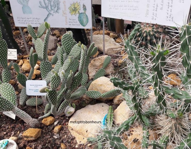 ..des cactus partout!